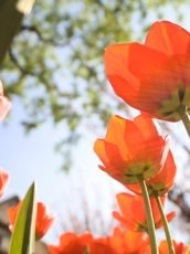 picjumbo.com_IMG_8697