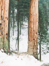 trees in the forest with snow all around