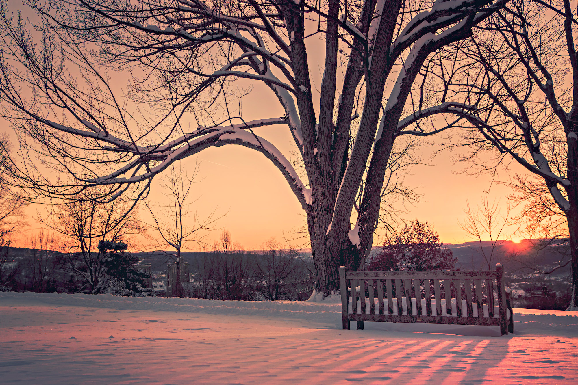 a tree in winter with no leaves next to a bench at sunset
