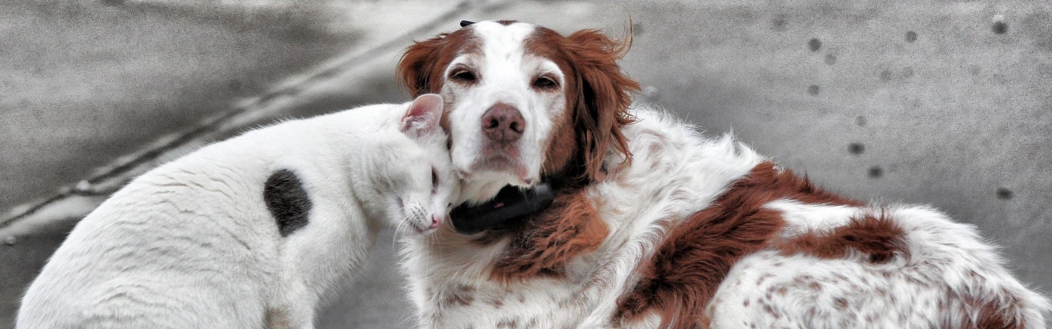 dog with red spots and cat embracing