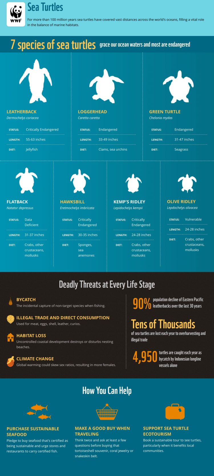 World Wildlife Fund Infographic: Everyting you ever wanted to know about sea turtles