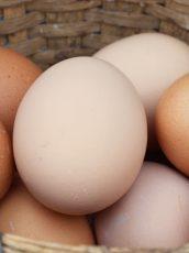 Basket full of eggs.