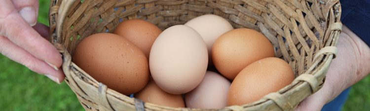 Basket full of eggs.