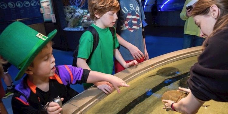 Children learning from an exhibit at the National Aquarium.