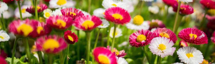 Image of pink and white flowers