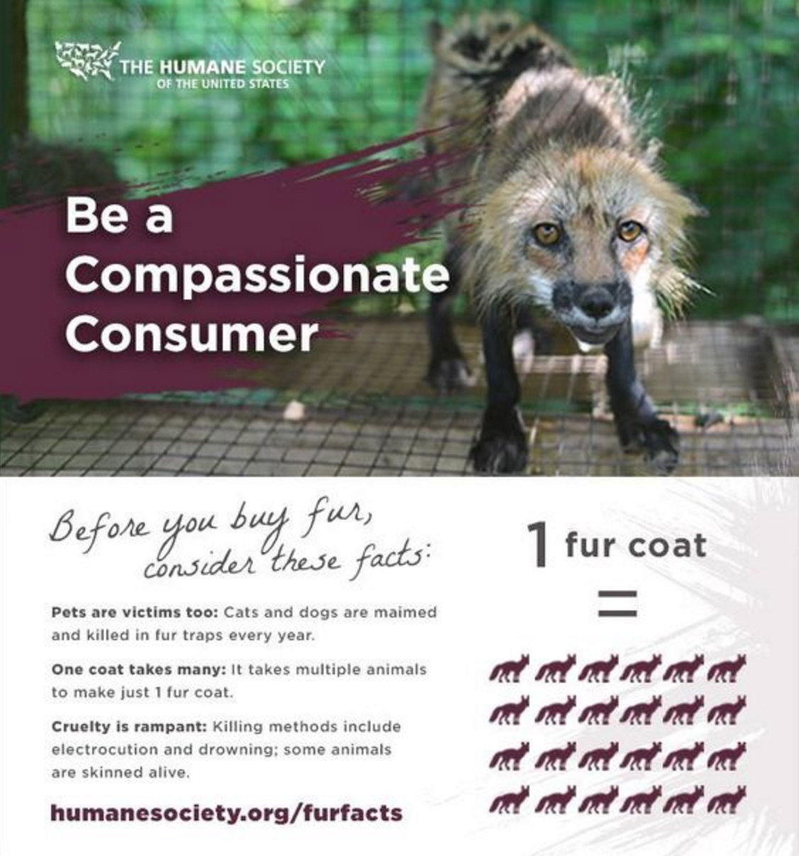 Humane Society Infographic