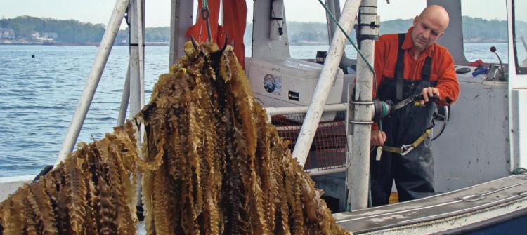 bren smith ocean farming
