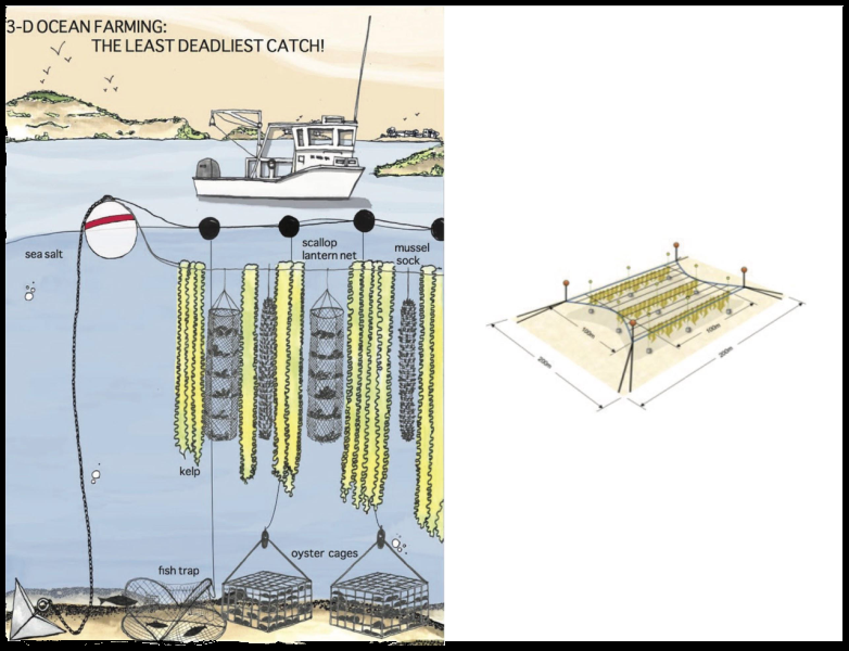 ocean farming diagram