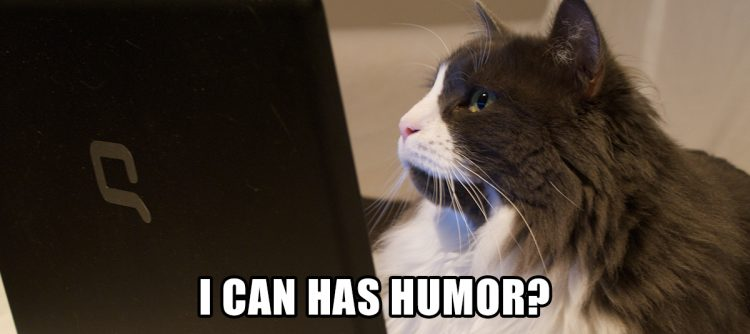 Cat looking at computer screen
