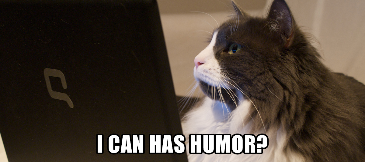 meme of cat looking at a computer screen