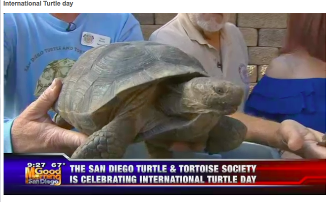 turtle on news
