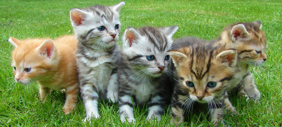 cats in a line in a grass field