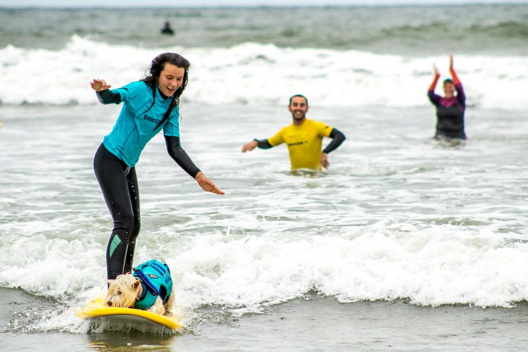dog on surfboard surf fundraiser