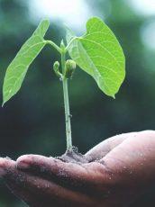 environmental-sustainability-earth-day